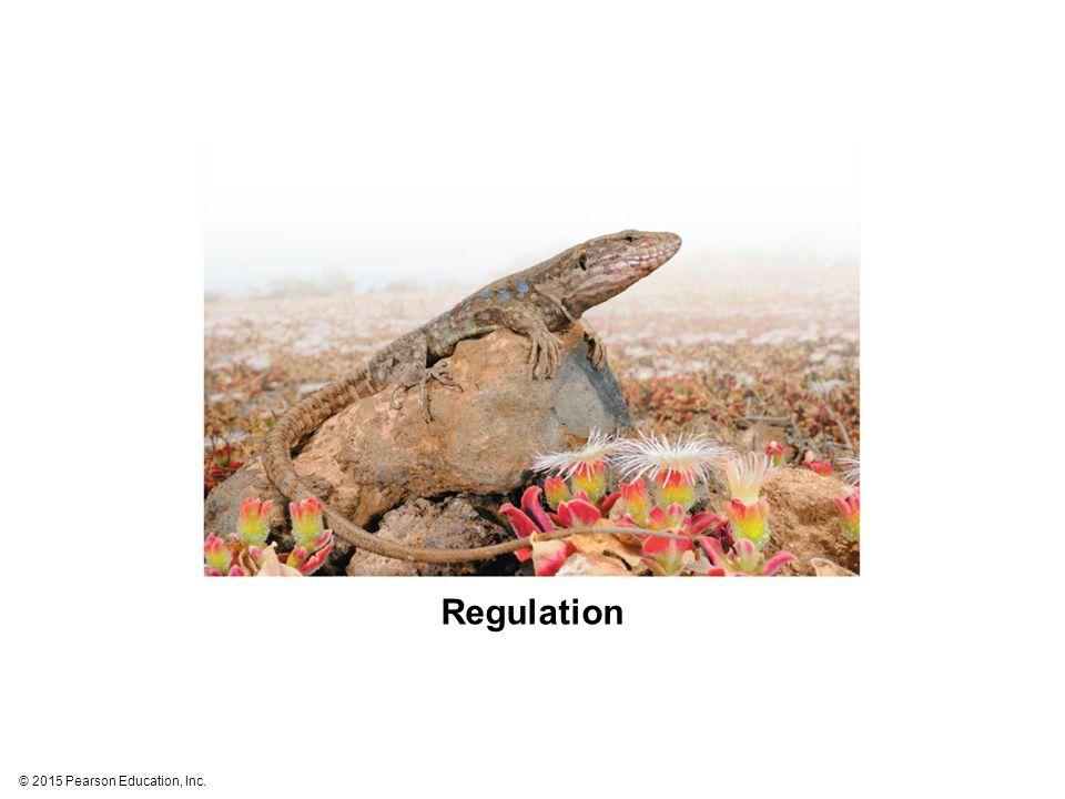 © 2015 Pearson Education, Inc. Regulation