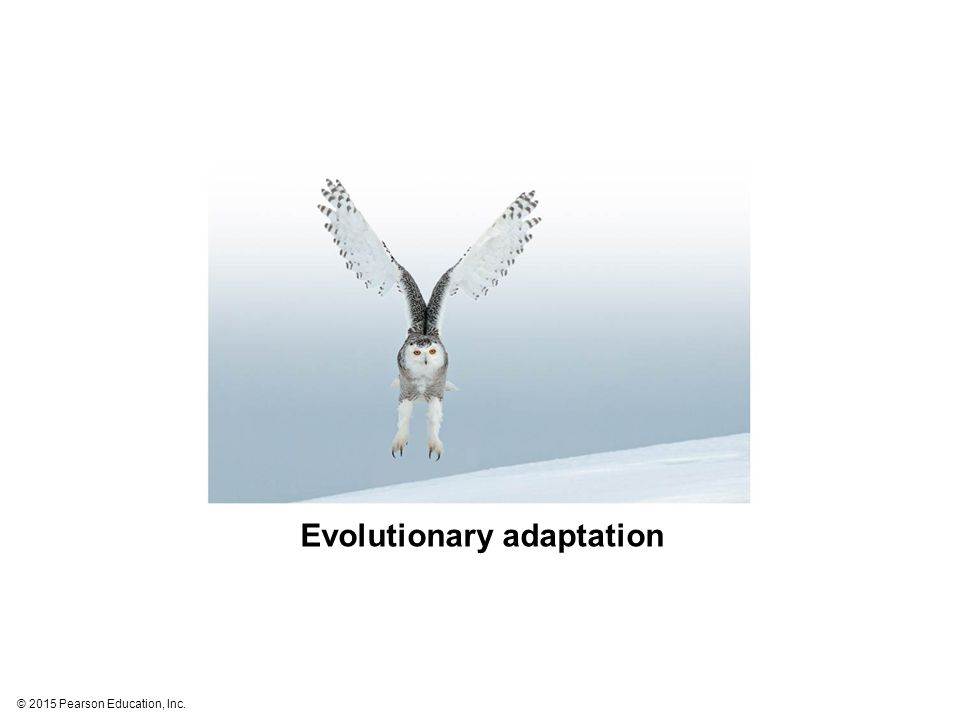 © 2015 Pearson Education, Inc. Evolutionary adaptation