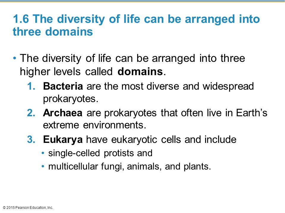 1.6 The diversity of life can be arranged into three domains The diversity of life can be arranged into three higher levels called domains. 1.Bacteria