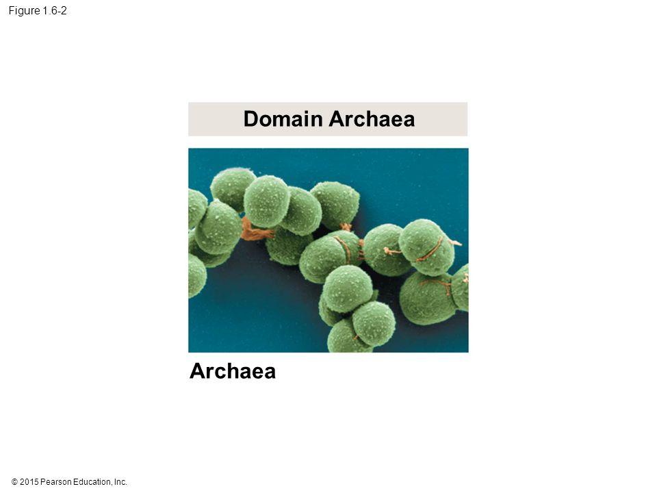 © 2015 Pearson Education, Inc. Figure 1.6-2 Domain Archaea Archaea