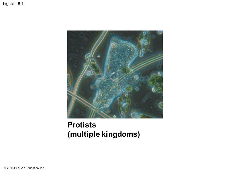 © 2015 Pearson Education, Inc. Figure 1.6-4 Protists (multiple kingdoms)