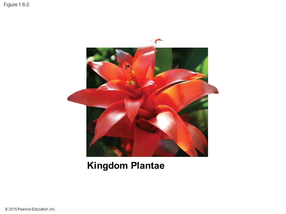 © 2015 Pearson Education, Inc. Figure 1.6-5 Kingdom Plantae