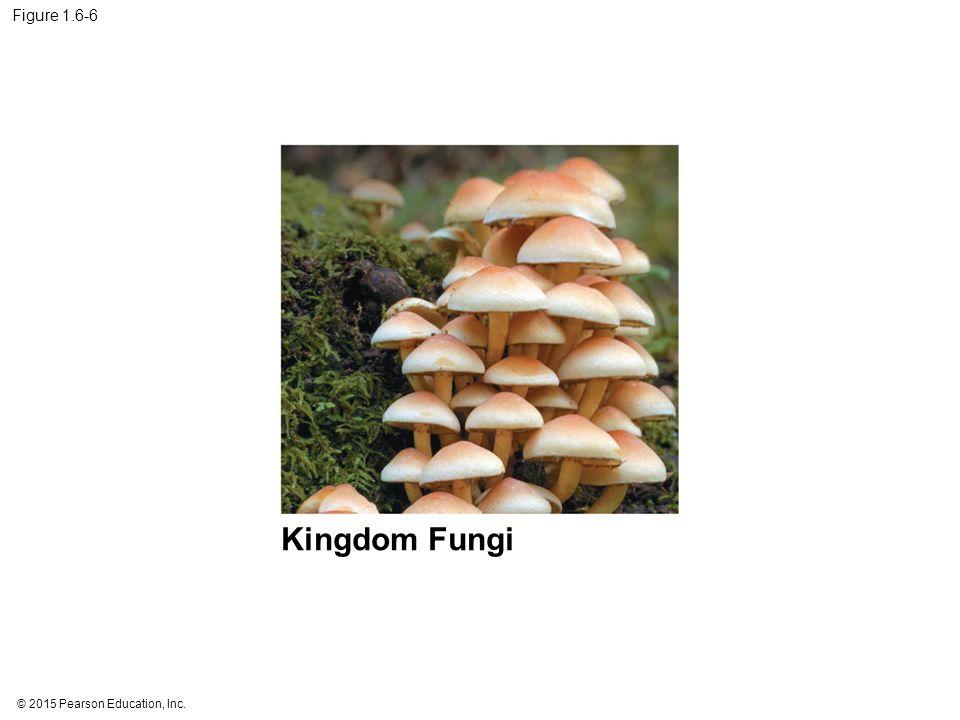 © 2015 Pearson Education, Inc. Figure 1.6-6 Kingdom Fungi