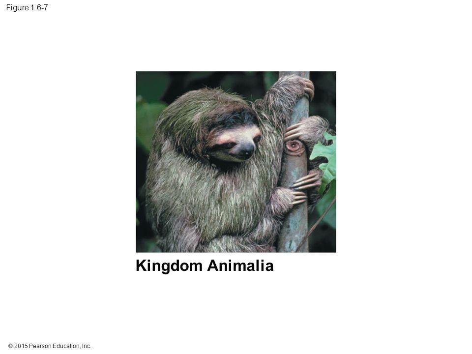 © 2015 Pearson Education, Inc. Figure 1.6-7 Kingdom Animalia