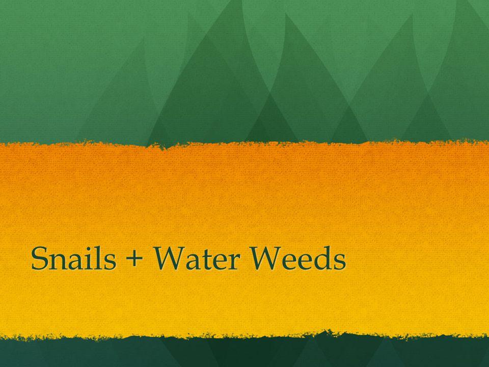 Snails + Water Weeds