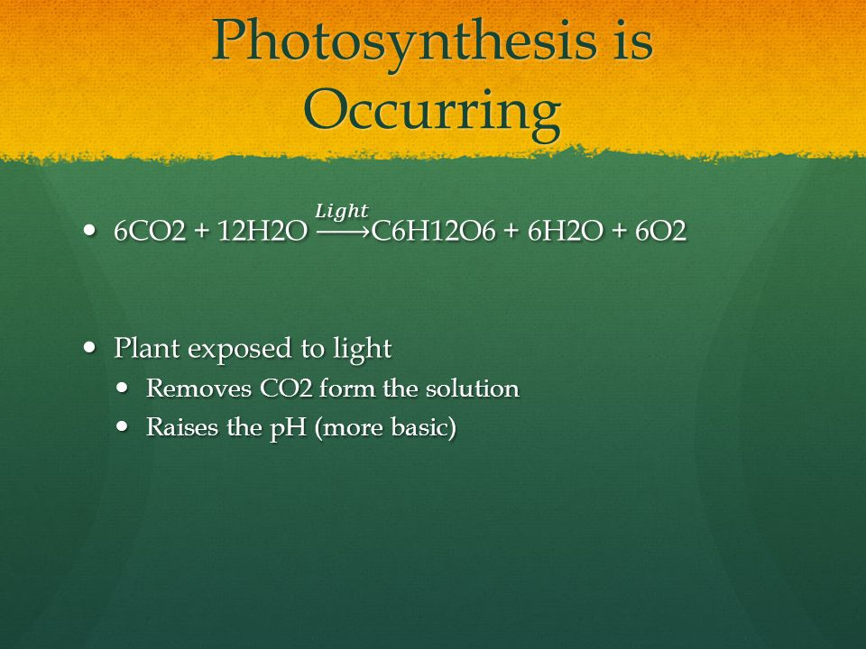 Photosynthesis is Occurring
