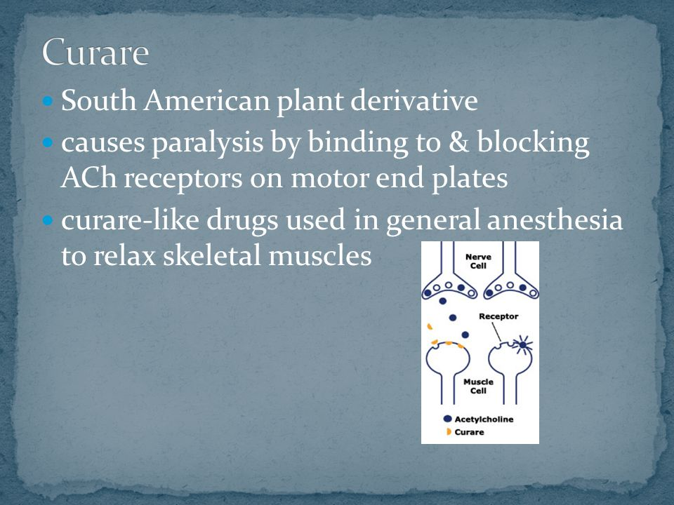 South American plant derivative causes paralysis by binding to & blocking ACh receptors on motor end plates curare-like drugs used in general anesthes