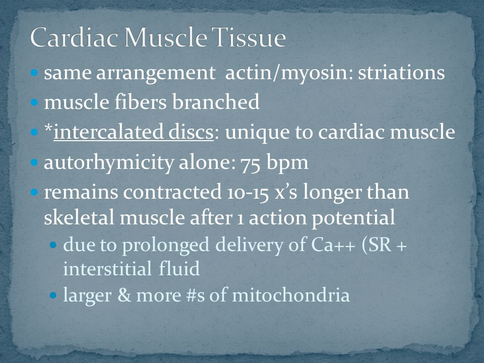 same arrangement actin/myosin: striations muscle fibers branched *intercalated discs: unique to cardiac muscle autorhymicity alone: 75 bpm remains con