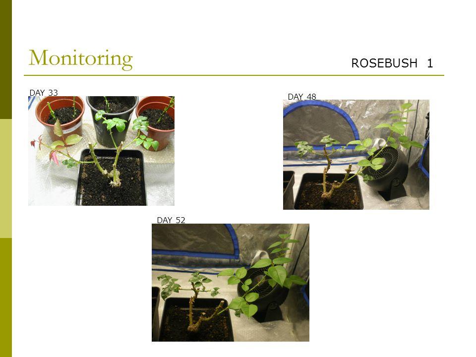 Monitoring ROSEBUSH 1 DAY 33 DAY 48 DAY 52