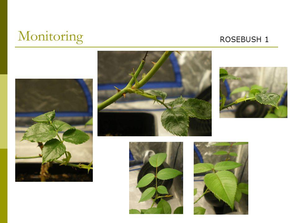 Monitoring ROSEBUSH 1