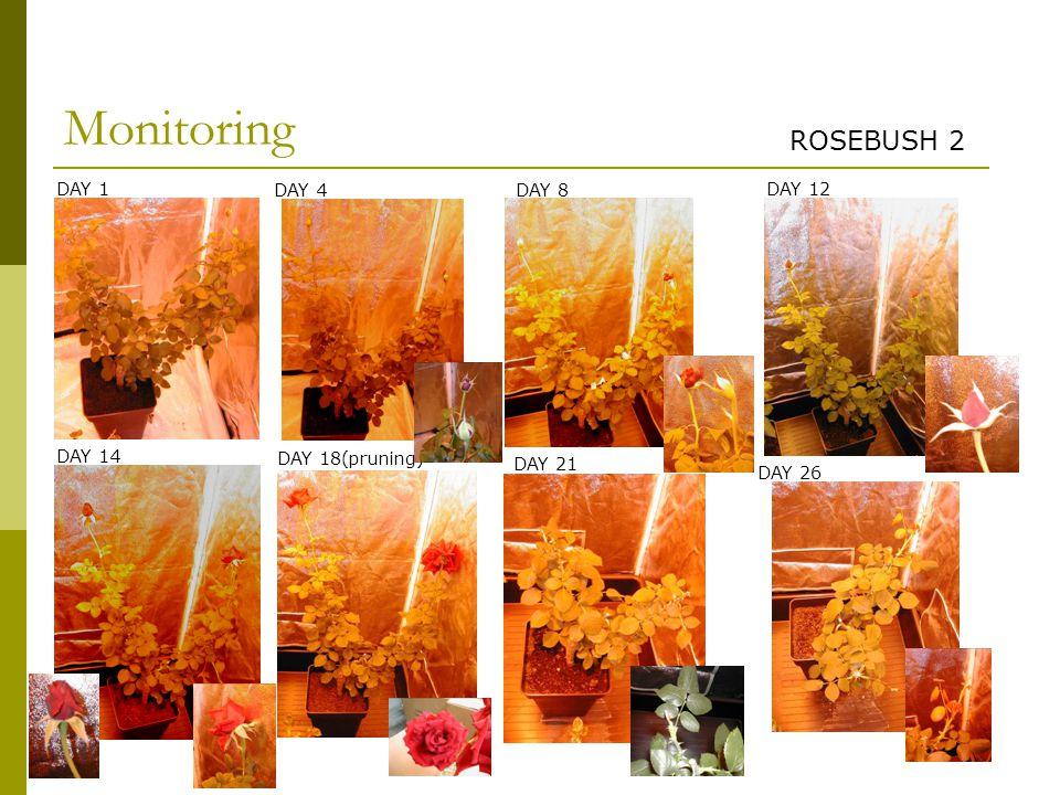 Monitoring ROSEBUSH 2 DAY 1 DAY 4 DAY 14 DAY 12 DAY 8 DAY 18(pruning) DAY 21 DAY 26