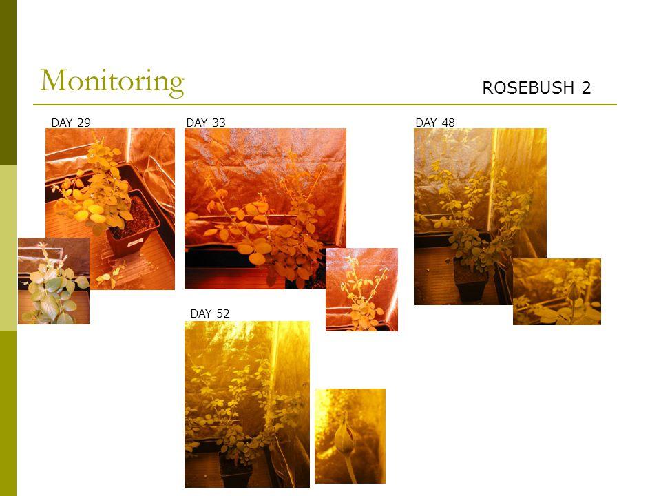 DAY 29 DAY 52 DAY 48DAY 33 Monitoring ROSEBUSH 2