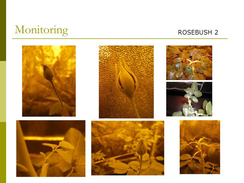 Monitoring ROSEBUSH 2