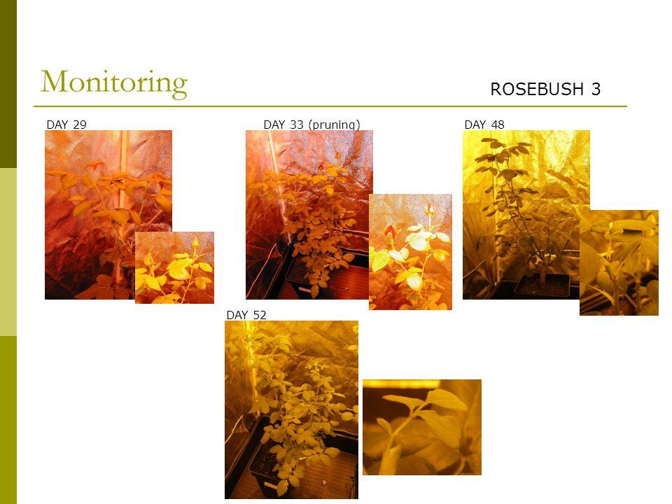 DAY 29 DAY 52 DAY 48DAY 33 (pruning) Monitoring ROSEBUSH 3