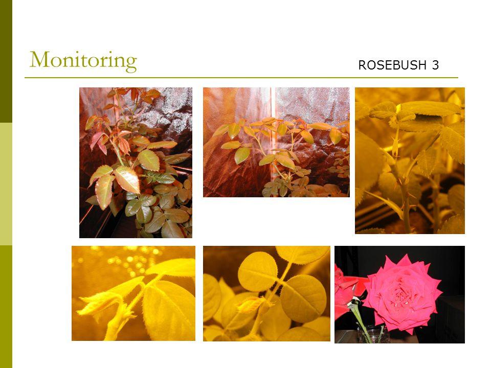 Monitoring ROSEBUSH 3