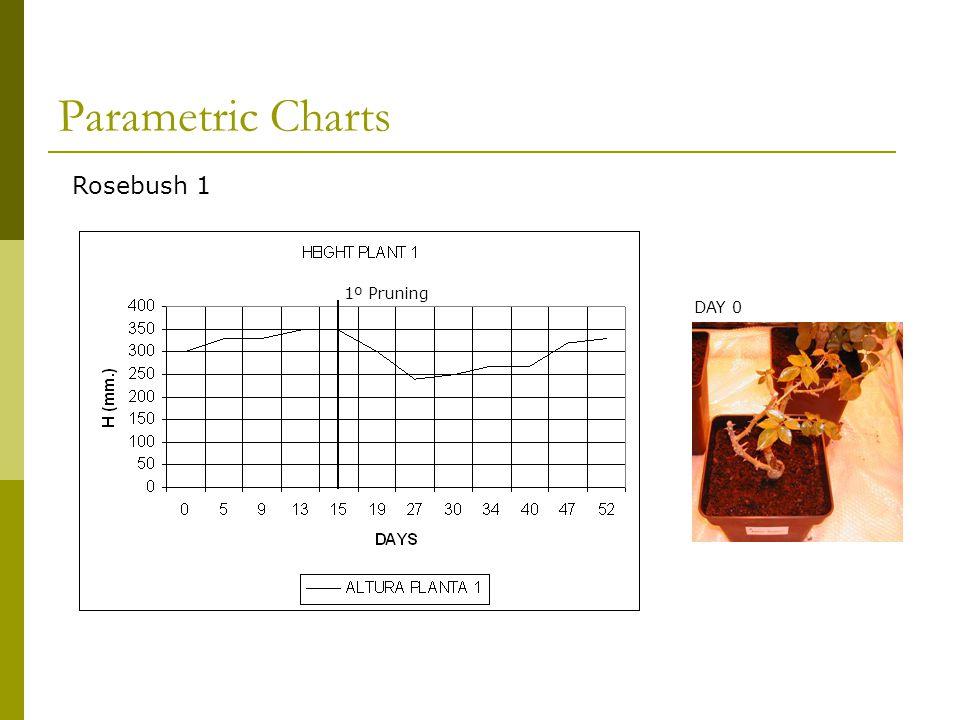 Rosebush 1 1º Pruning DAY 0 Parametric Charts