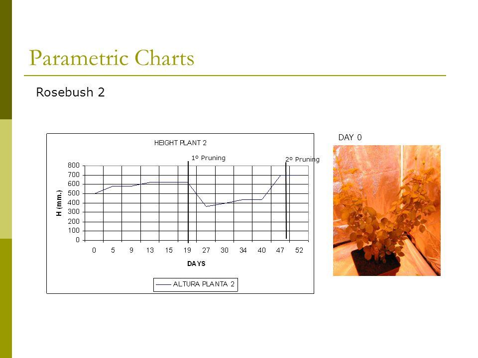 1º Pruning Rosebush 2 2º Pruning DAY 0 Parametric Charts