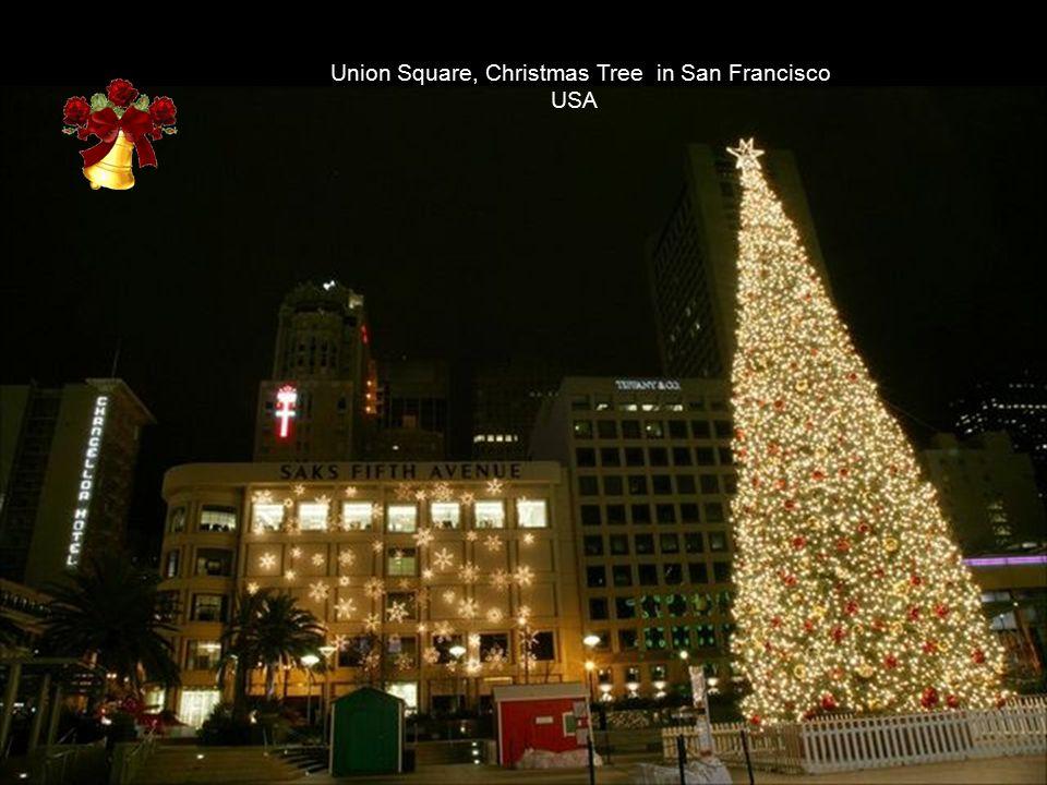 National Christmas Tree Washington, DC