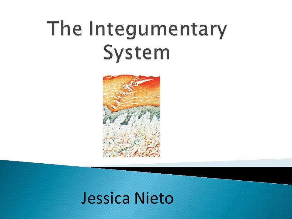 Jessica Nieto