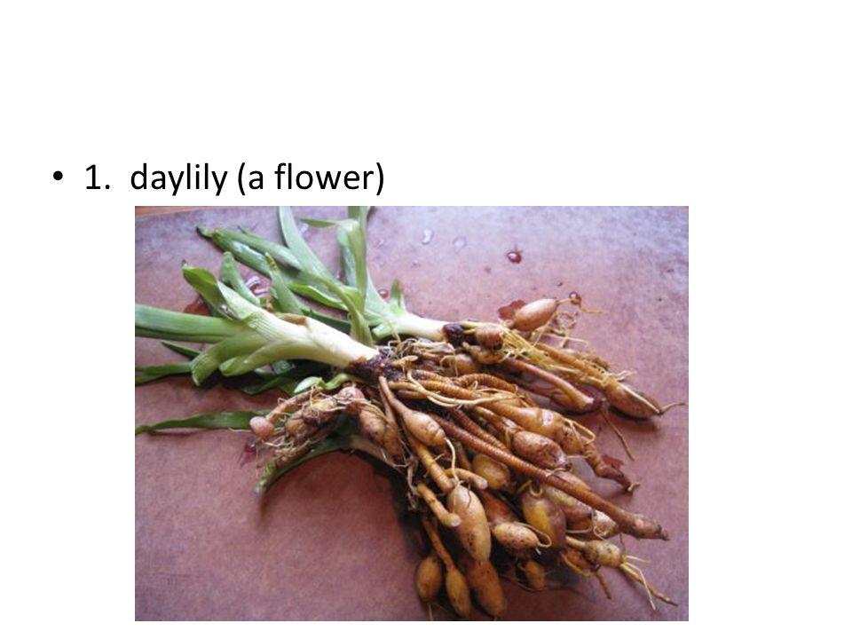 1. daylily (a flower)