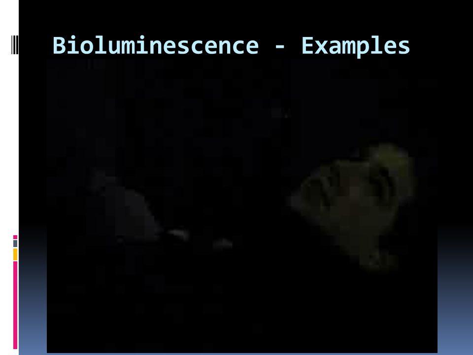 Bioluminescence - Examples