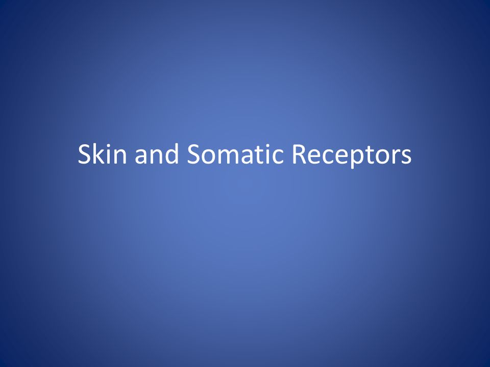 Skin and Somatic Receptors