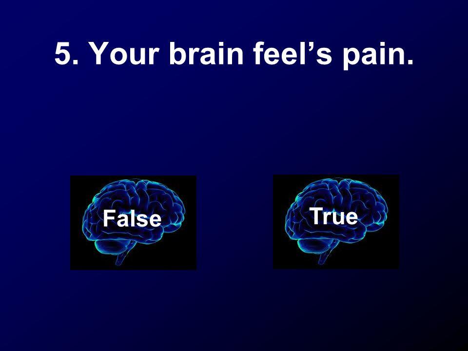 5. Your brain feel's pain. False True