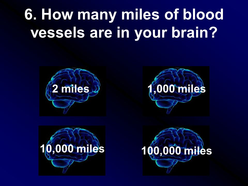 6. How many miles of blood vessels are in your brain.