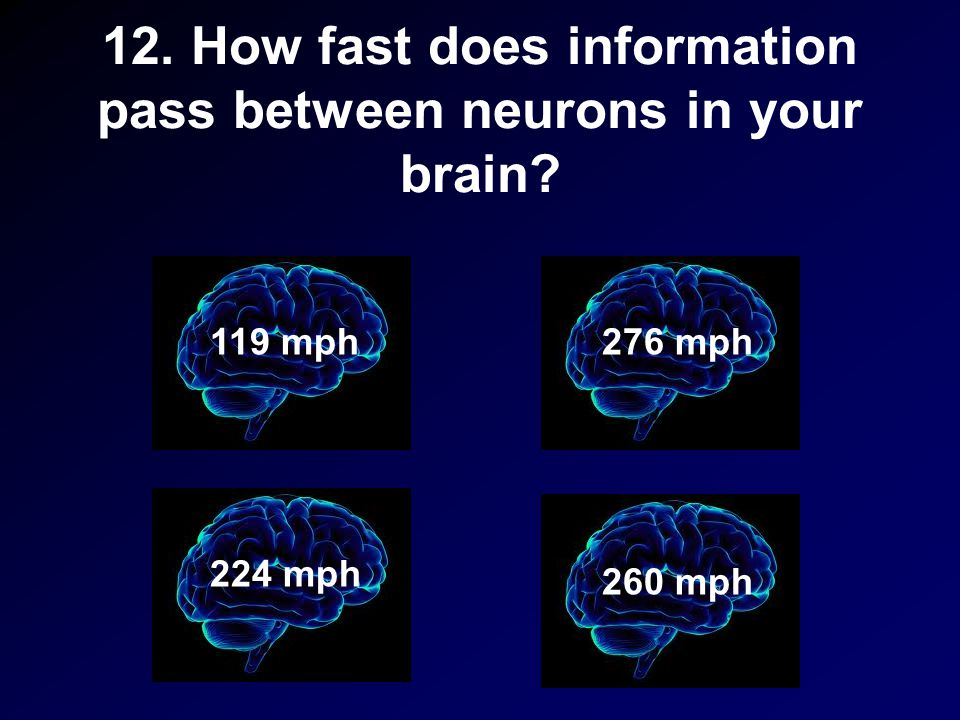 12. How fast does information pass between neurons in your brain? 119 mph 260 mph 224 mph 276 mph