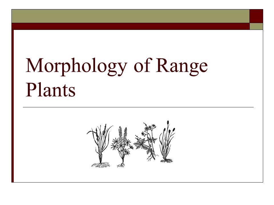 Morphology of Range Plants