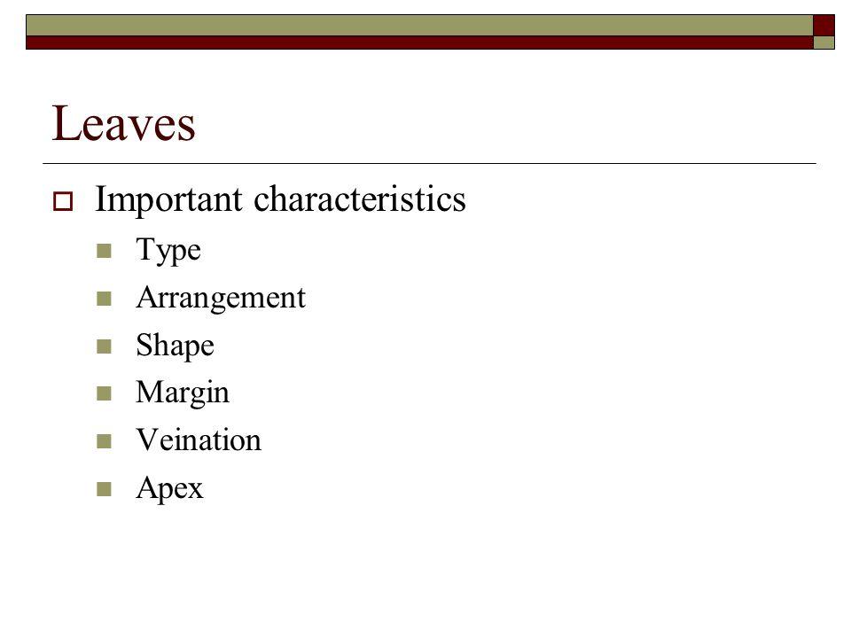 Leaves  Important characteristics Type Arrangement Shape Margin Veination Apex