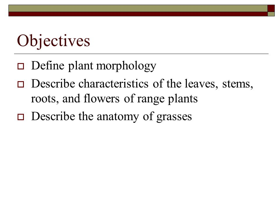 Objectives  Define plant morphology  Describe characteristics of the leaves, stems, roots, and flowers of range plants  Describe the anatomy of gra