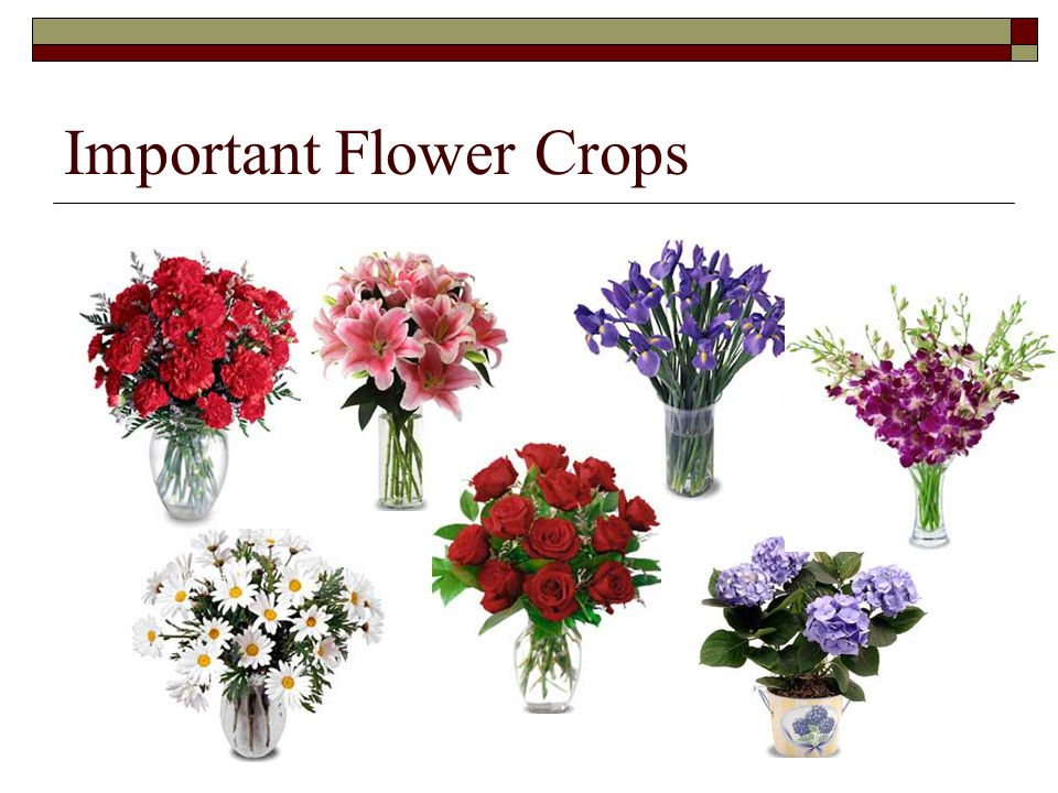 Important Flower Crops