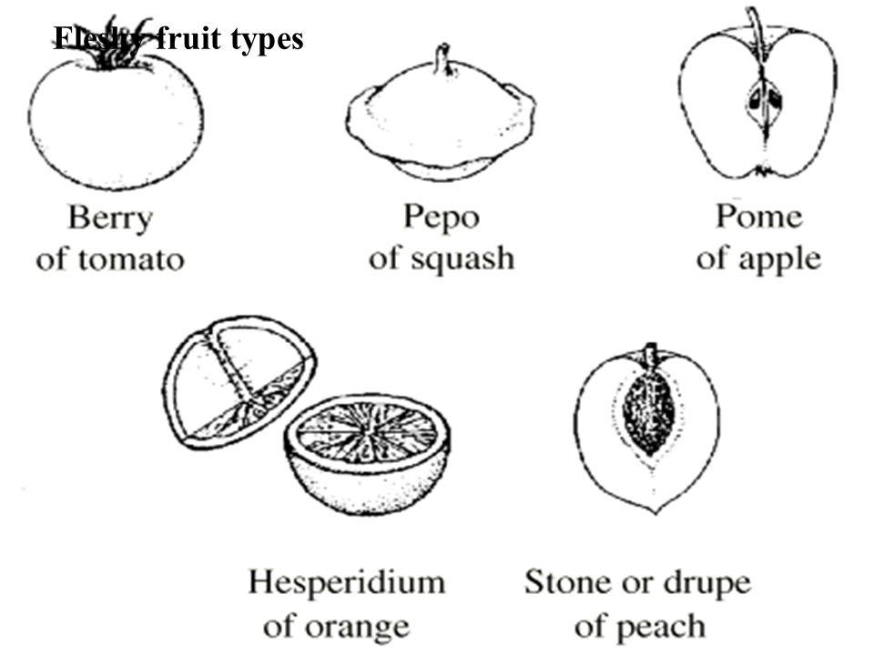 Fleshy fruit types