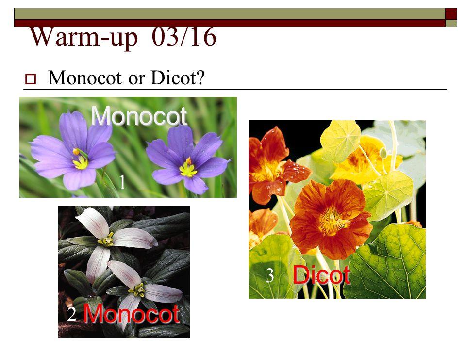 Warm-up 03/16  Monocot or Dicot? 1 2 3 Monocot Monocot Dicot