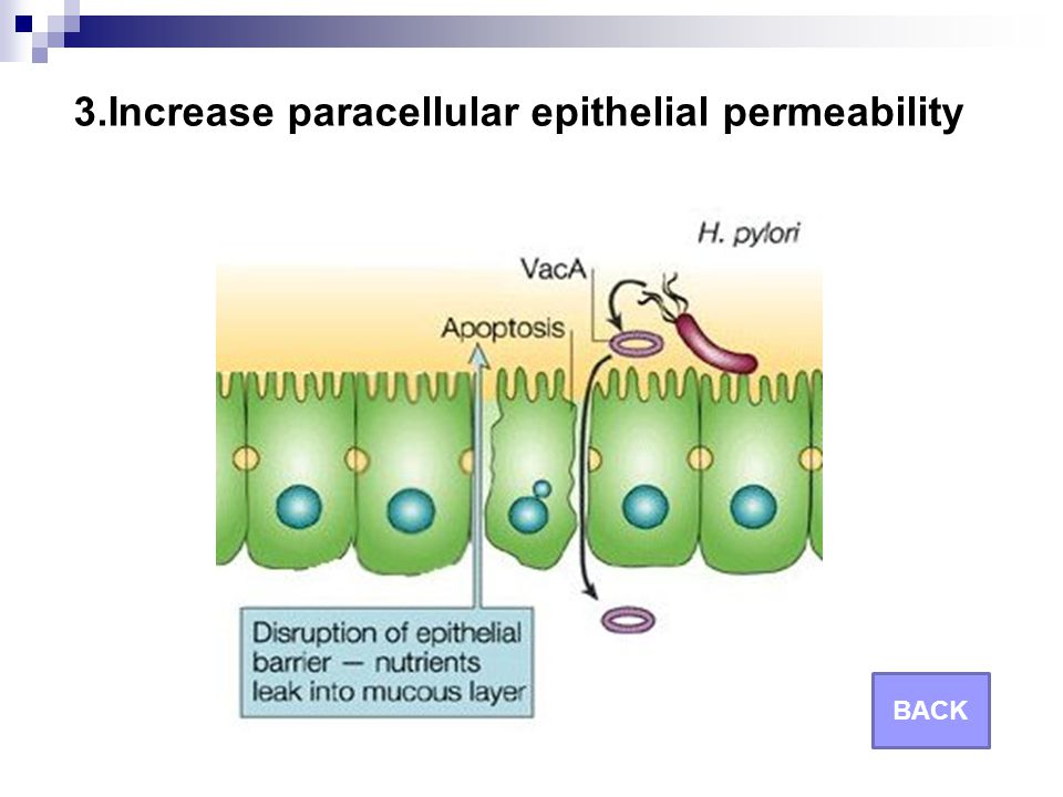 3.Increase paracellular epithelial permeability BACK