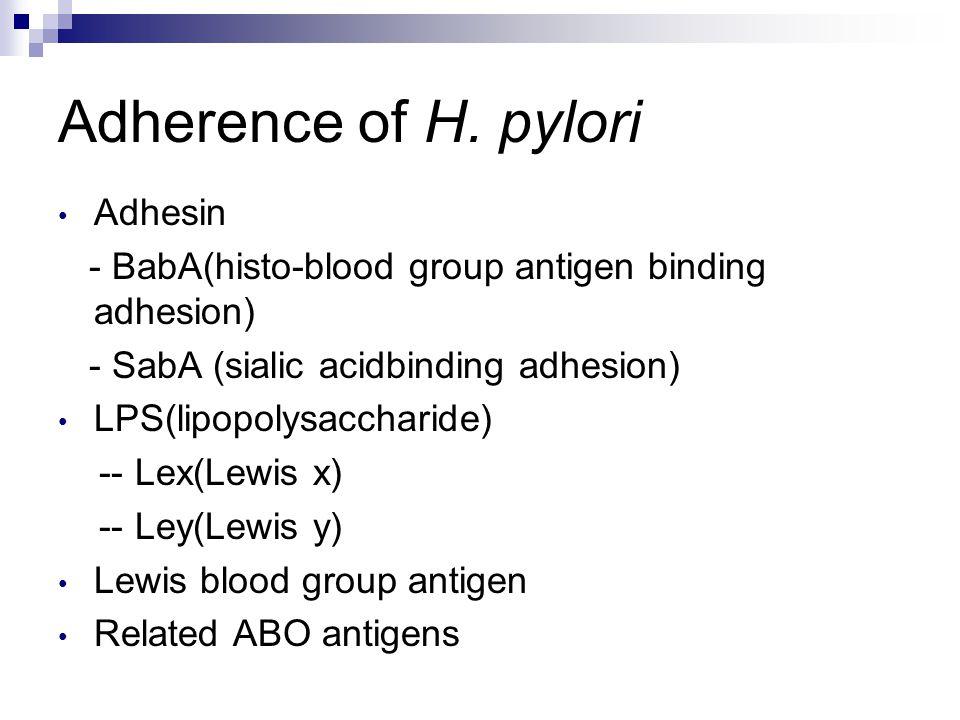 Adherence of H.