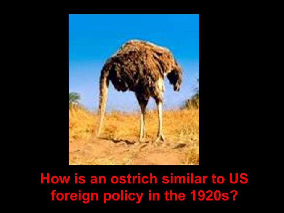 How is an ostrich similar to US foreign policy in the 1920s