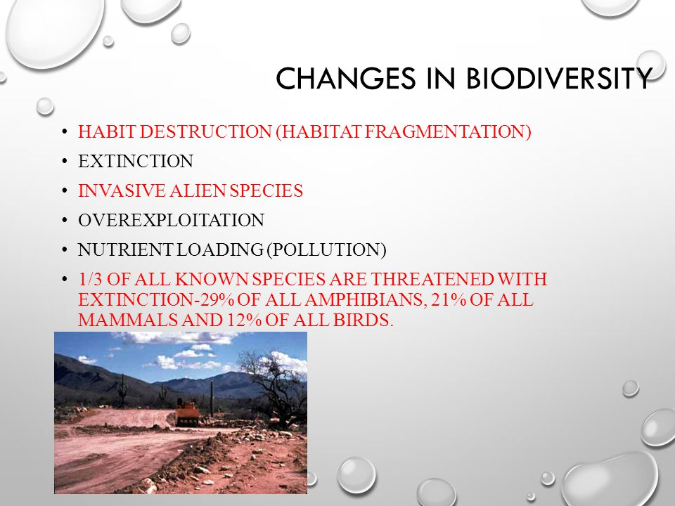 CHANGES IN BIODIVERSITY HABIT DESTRUCTION (HABITAT FRAGMENTATION) EXTINCTION INVASIVE ALIEN SPECIES OVEREXPLOITATION NUTRIENT LOADING (POLLUTION) 1/3 OF ALL KNOWN SPECIES ARE THREATENED WITH EXTINCTION-29% OF ALL AMPHIBIANS, 21% OF ALL MAMMALS AND 12% OF ALL BIRDS.