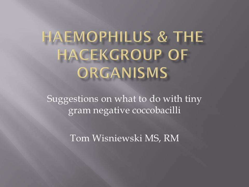 Suggestions on what to do with tiny gram negative coccobacilli Tom Wisniewski MS, RM