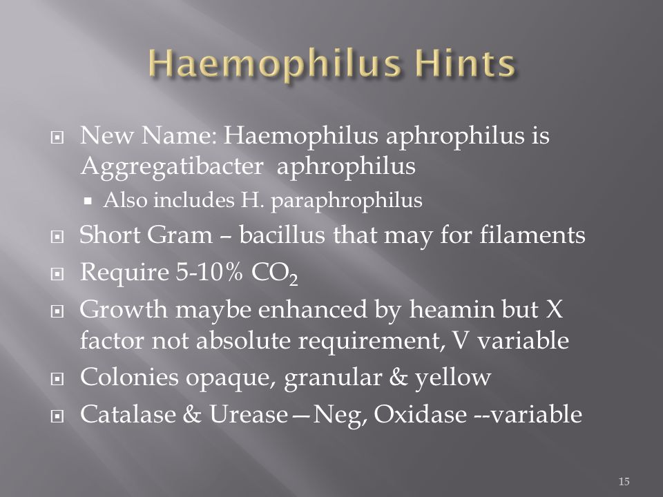  New Name: Haemophilus aphrophilus is Aggregatibacter aphrophilus  Also includes H.