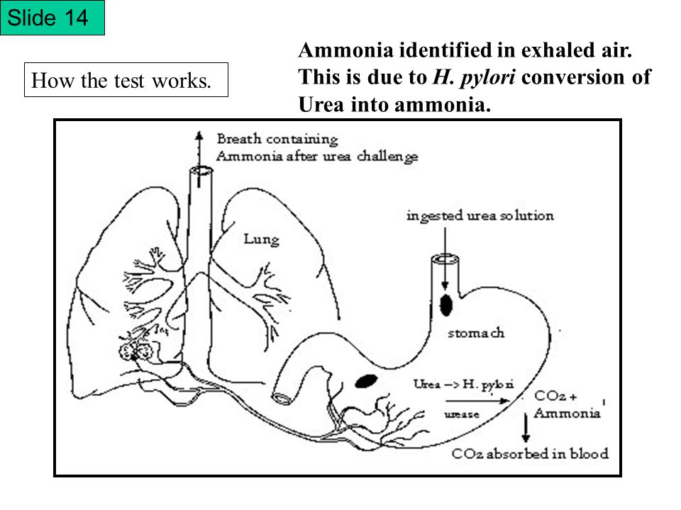 How the test works. Ammonia identified in exhaled air.