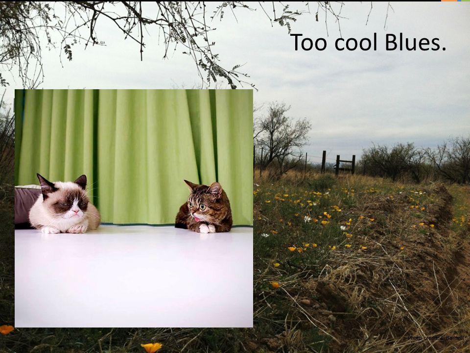 Photo credit: L. Barnett Too cool Blues.