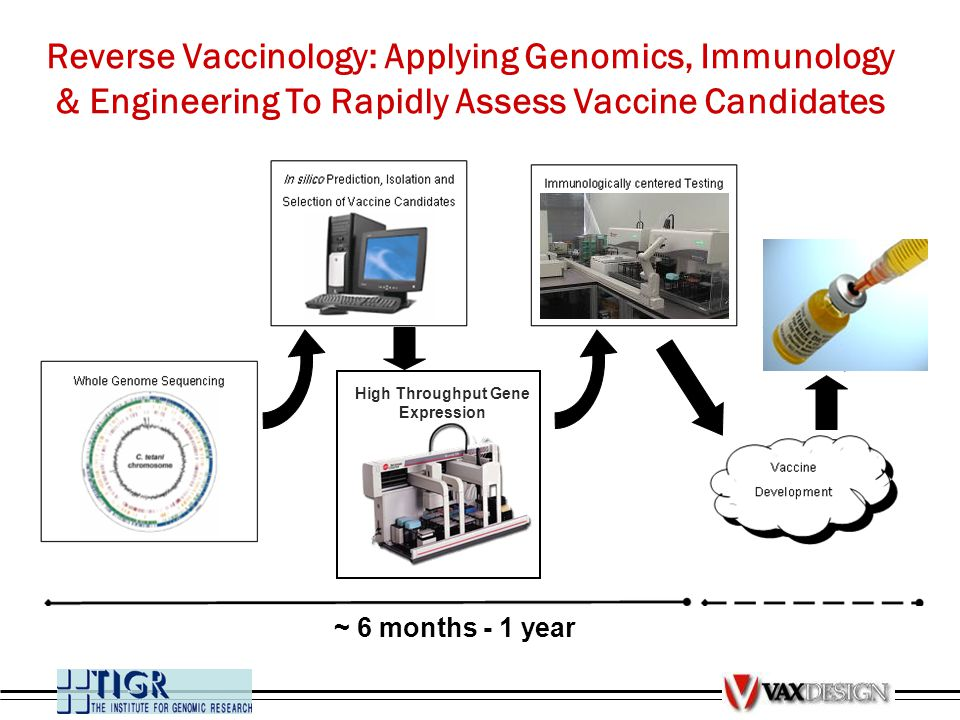 ~ 6 months - 1 year High Throughput Gene Expression Reverse Vaccinology: Applying Genomics, Immunology & Engineering To Rapidly Assess Vaccine Candida