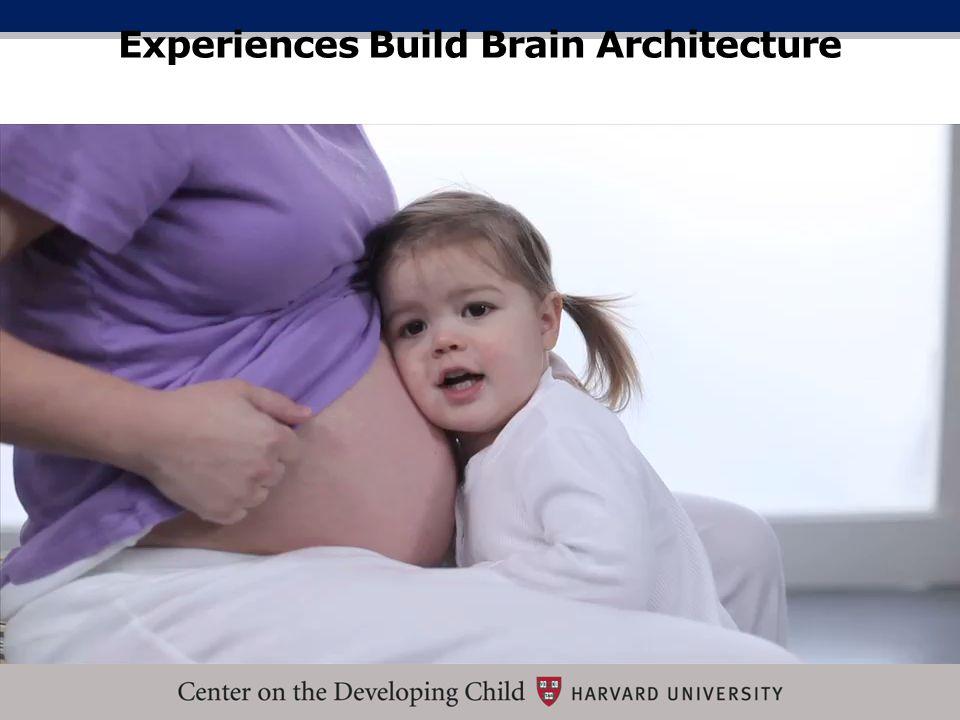 Experiences Build Brain Architecture
