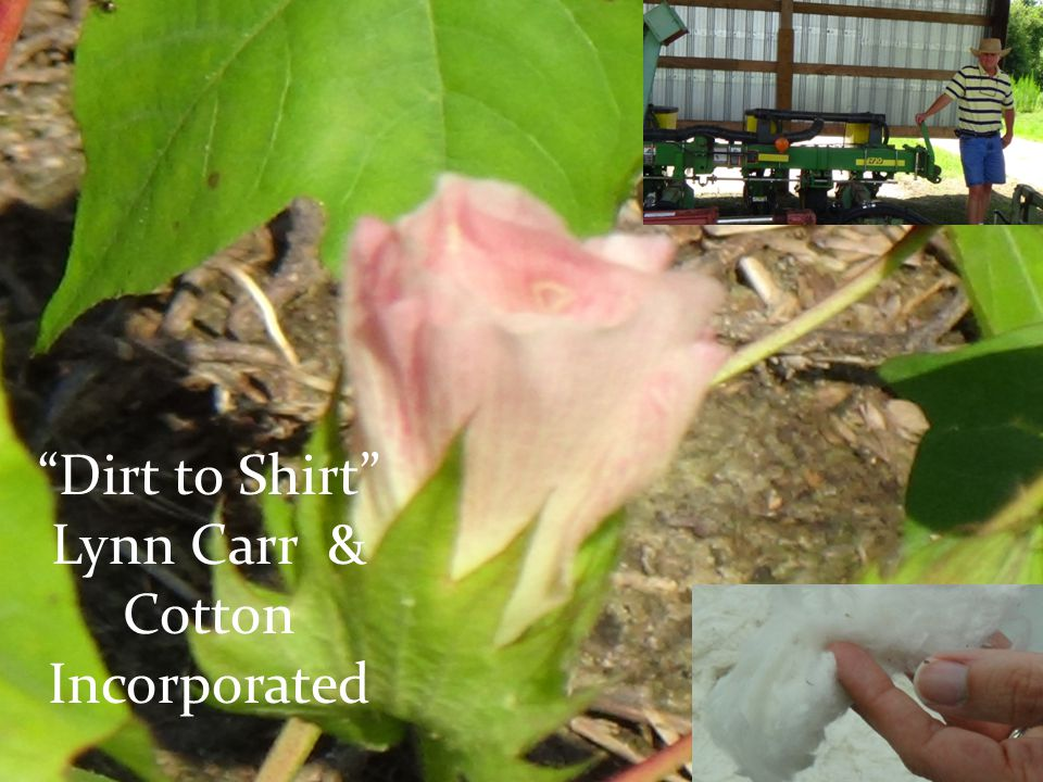 Dirt to Shirt Lynn Carr & Cotton Incorporated