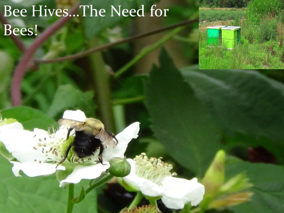 Bee Hives…The Need for Bees!