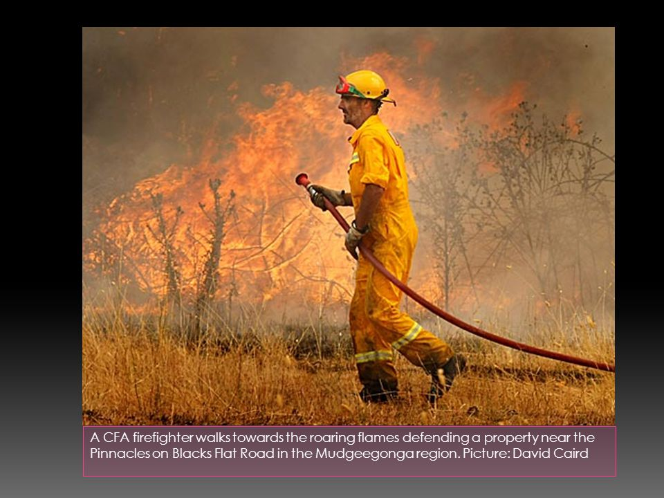 A CFA firefighter walks towards the roaring flames defending a property near the Pinnacles on Blacks Flat Road in the Mudgeegonga region.
