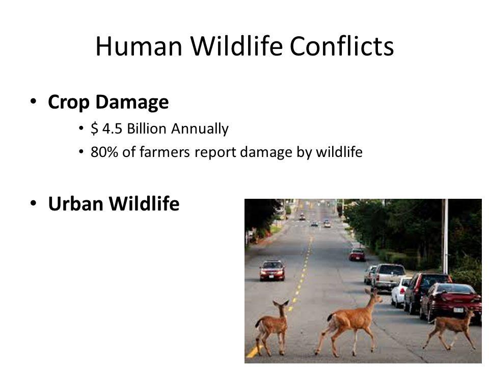 Human Wildlife Conflicts Crop Damage $ 4.5 Billion Annually 80% of farmers report damage by wildlife Urban Wildlife