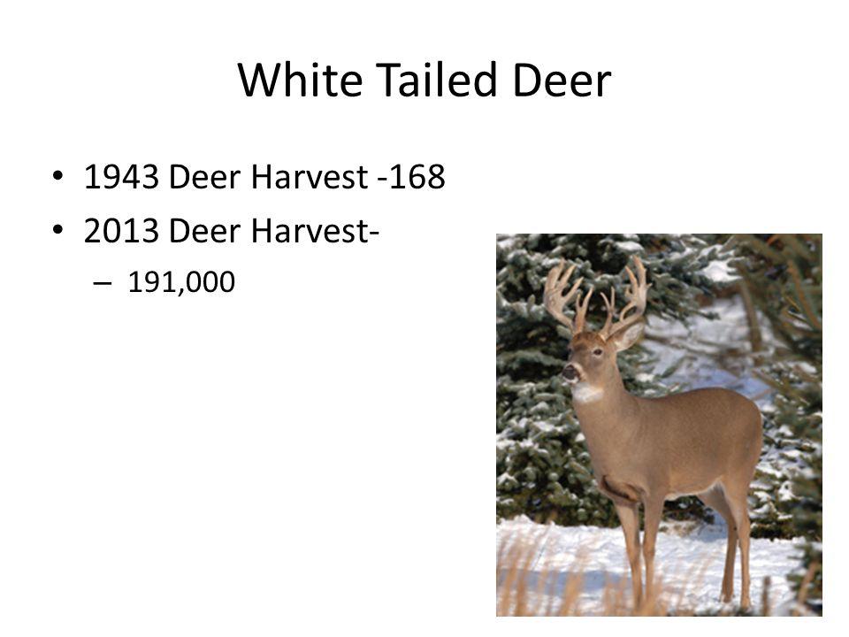 White Tailed Deer 1943 Deer Harvest -168 2013 Deer Harvest- – 191,000